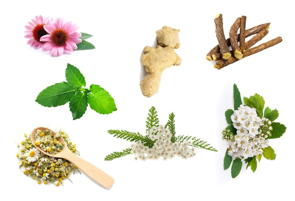 7 herbs for health