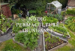 No Dig Permaculture