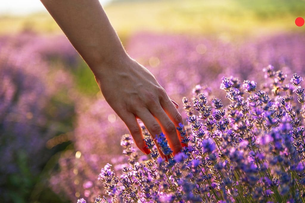 Can aromatherapy ease menopause?