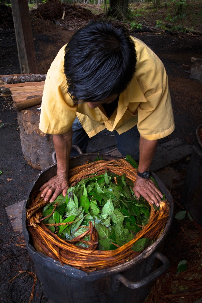 Shamans, or healers, prepare the Ayahuasca brew by combining chacruna leaves, that contain the powerful psychedelic DMT, with the ayahuasca vine.