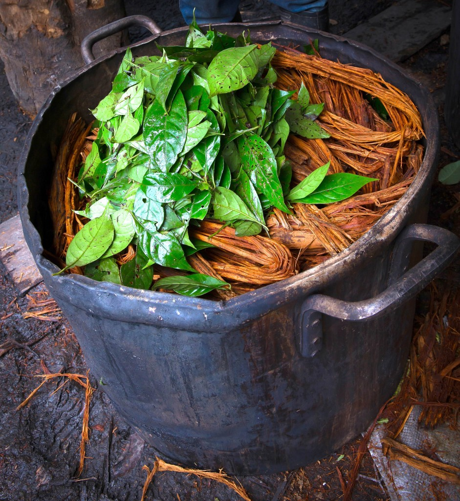 The ayahuasca brew, which is a combination of the ayahuasca vine (Banisteriopsis caapi), chacruna leaves (Psychotria viridis), and water.