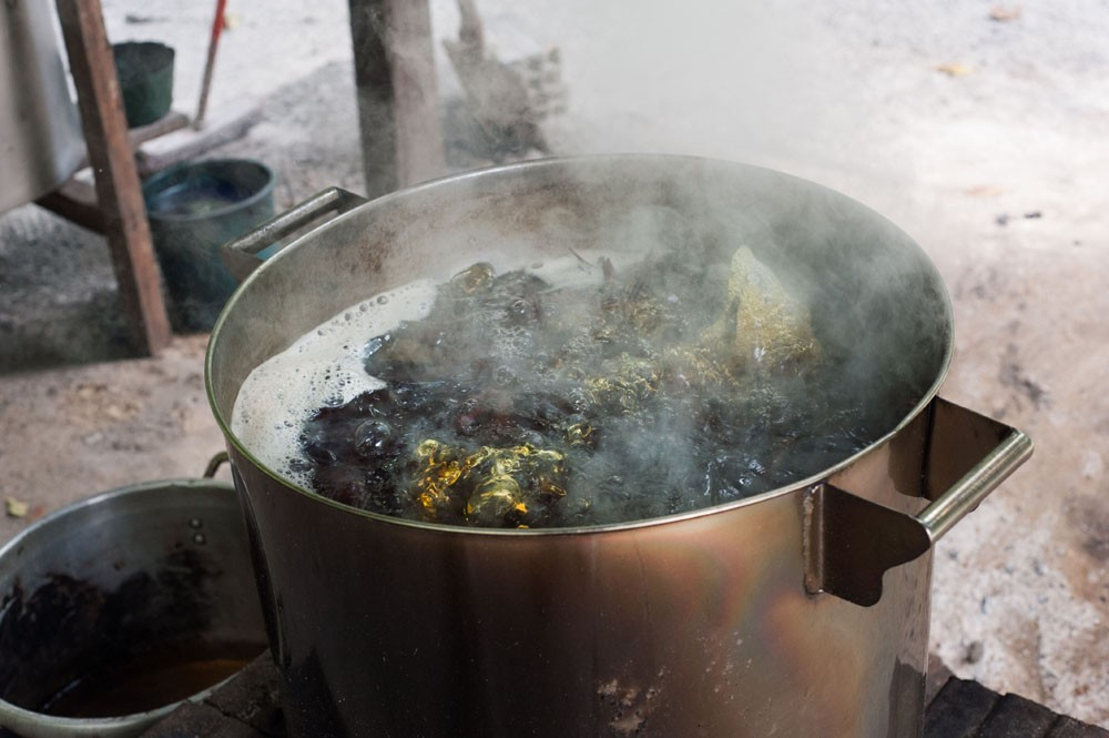 Photo: Ayahuasca leaf and vine is boiled down to a strong, thick brew. Via: Tracey Eller.