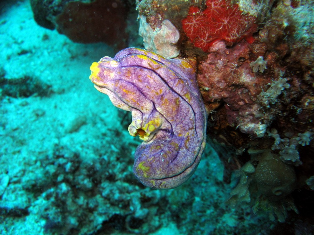 Sea squirts and all vertebrate species share the endocannabinoid system Via: Andrey Nosik | Shutterstock