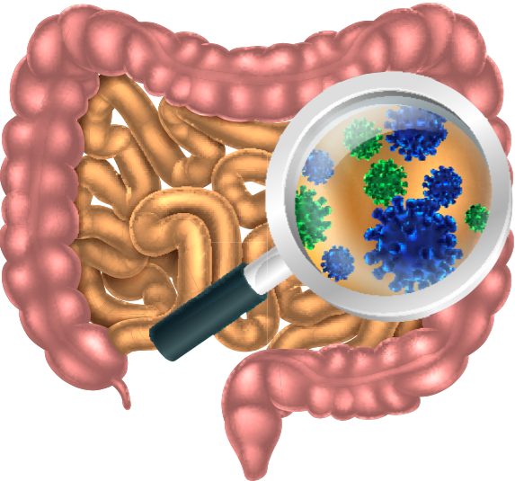 Research shows obese people have different intestinal bacteria than slim people. Via: Christos Georghiou | Shutterstock.