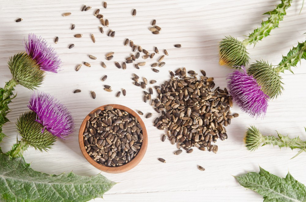 Milk thistle active ingredients are most concentrated in the plant's seeds. Via: Soyka | Shutterstock.