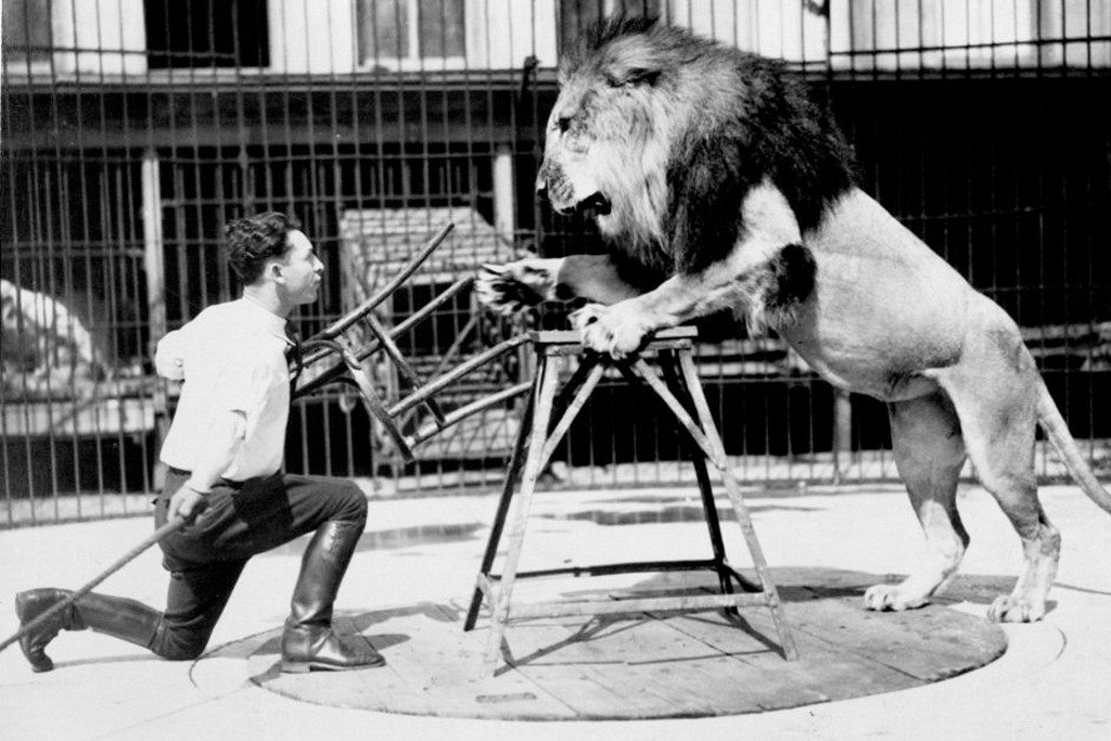 Photo: Clyde Beatty taming a lion with a chair. Via: Harvard Library.