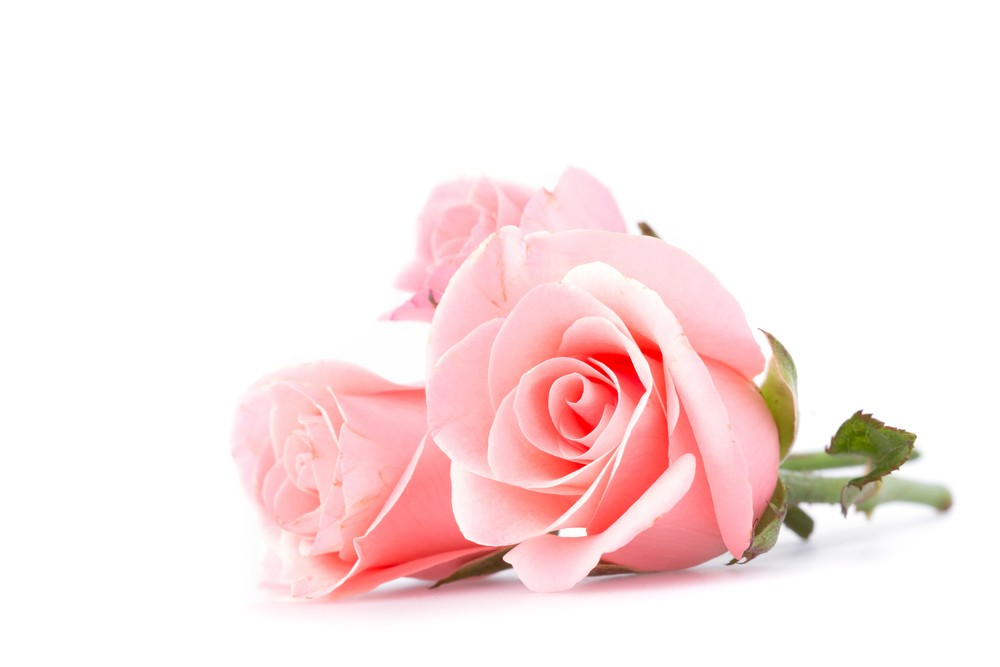 When did you last buy yourself roses? Via: Swetlana Wall | Shutterstock.