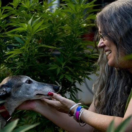 Teri Heede, a medical marijuana patient with multiple sclerosis, at her home with marijuana plants in her backyard in Makakilo, Oahu.