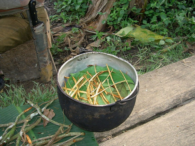 The ayahuasca brew. Photo via: Terpsichore | Wikimedia | Licensed under Creative Commons 3.0.
