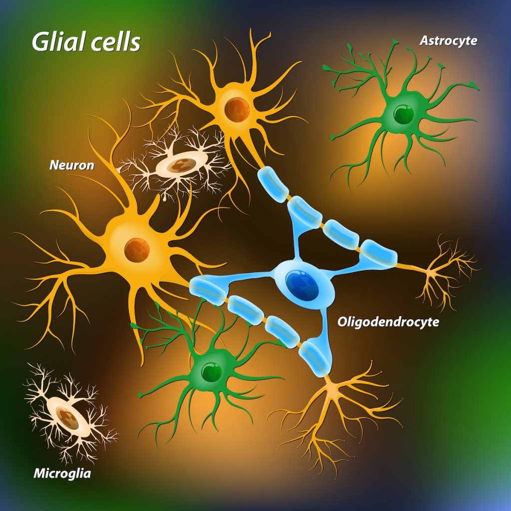 Glial and microglial cells. Via: Designua | Shutterstock.